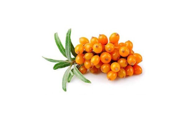 sea buckthorn oil - buy online at vijayimpex.co.in