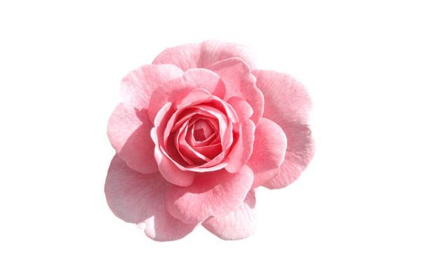 rose water - buy online at vijayimpex.co.in