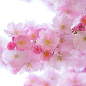 Spring Morning CP Stable Fragrance Oil