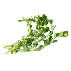 Brahmi Extract - Water Soluble
