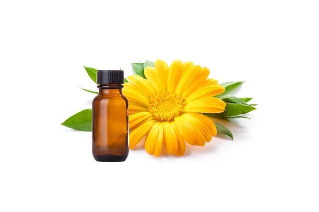 Calendula Essential Oil | Vijay Impex