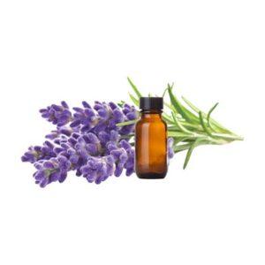 English Lavender Fragrance Oil