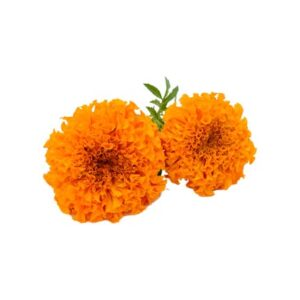 Marigold Extract - Water Soluble