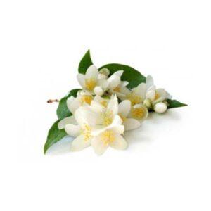 Jasmine Floral Wax