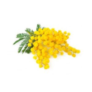 Mimosa Floral Wax