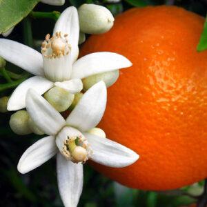 Premium Orange Blossom Lip Flavoring Oil